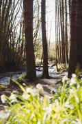 Stream flowing amidst trees in woodland Stock Photos