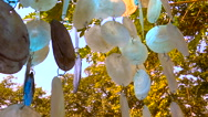 Shells of the mother of pearl Stock Footage