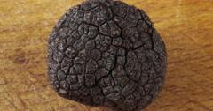 Perigord Truffle, tuber melanosporum, Mushrooms, Real Time 4K, Moving Image Stock Footage