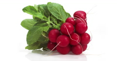 Red Radish, raphanus sativus against White Background, Real Time 4K, Moving Stock Footage