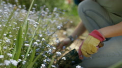 4K Smiling woman working in community garden, digging & smelling the flowers Stock Footage