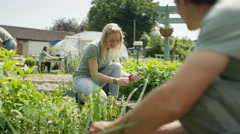 4K Cheerful group of volunteers working together in community garden Stock Footage