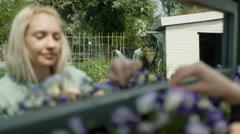 4K Volunteers working in community garden, woman tending flowers in a planter Stock Footage