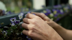 4K Volunteers working in community garden, man tending flowers in a planter Stock Footage