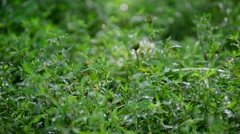 Green grass in rain drops Stock Footage