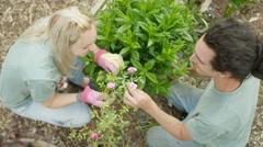 4K Overhead view of cheerful volunteer workers in community garden Stock Footage