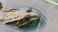Frog in the River Stock Footage