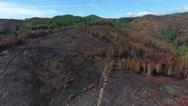 Deforestation After Forest Fire Natural Disaster aerial shot 4k Stock Footage