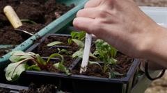 4K Close up on hands of woman planting seedlings in the garden Stock Footage