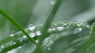 Rain drops falling on the leaves, Slow motion Stock Footage