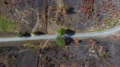 Road in burnt pine tree forest Aerial view overhead 4k Stock Footage
