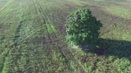 Alone tree in the fields Stock Footage