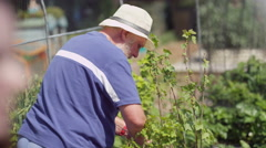 4K Senior man working in the garden, digging & planting Stock Footage