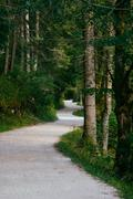 Twisting track leading through dense forest Stock Photos