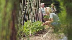 4K Volunteers working in community garden, man & woman relaxing in background Stock Footage