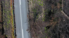 Road burnt pine tree forest deforestation fire disaster Aerial view overhead 4k Stock Footage