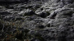 Moss Covered Eldhraun Lava Field with Icelandic Vegetation Stock Footage