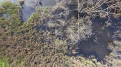 Aerial view of swamp Stock Footage