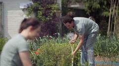 4K Volunteer team working in community allotment digging soil & planting Stock Footage
