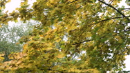 Autumn landscape with trees and leaves Stock Footage