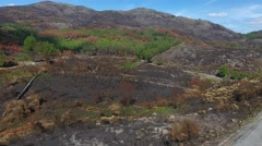 Burnt pine tree forest deforestation fire natural disast Aerial view 4k Stock Footage