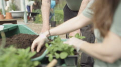 4K Man & woman chatting & planting seedlings in community allotment Stock Footage