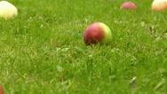 Falling apple, slow motion Stock Footage