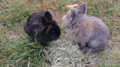 Two Rabbits Stock Footage