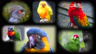 Portraits of Parrots Collage Stock Footage