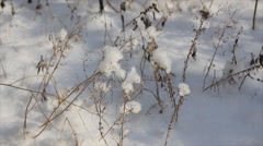 Dry plants in snow Stock Footage