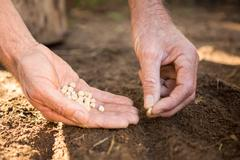 Cropped image of male gardener placing seeds on dirt at botanical garden Stock Photos