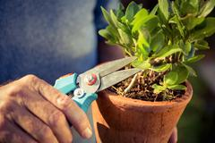 Cropped image of male gardener cutting leaves using pruning shears atfarm Stock Photos