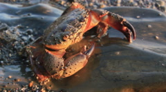 Sea crab in sunlight Stock Footage