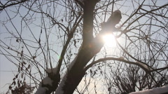 Snow particles in sunlight Stock Footage