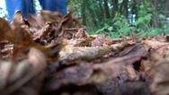 Un recogniseable man walking through crisp brown autumn leaves Stock Footage