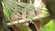 Girl lying in a hammock in the tropical jungles Stock Footage
