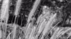 Grass slowly moves in the wind during parallel camera slide Stock Footage