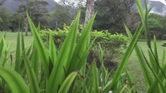 Peeking through blades of grass into beautiful park area Stock Footage