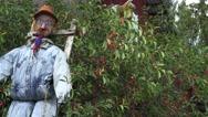 Handmade scarecrow in cheery tree near in garden. 4K Stock Footage