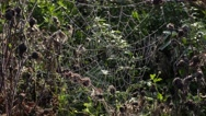 Spider Web,cobweb in meadow Stock Footage