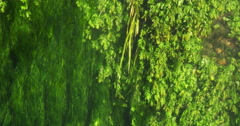 River with Aquatic Plants, Normandy, Real Time 4K Stock Footage