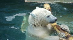 Polar bear cub playing in the pool Stock Footage