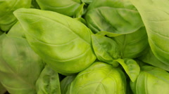 detail of beautiful and fresh basil leaves Stock Footage