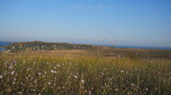 Field With Flowers Near the Sea. in the Distance You Can See the Lighthouse Stock Footage