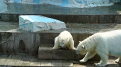 Polar bear cub with his mother Stock Footage