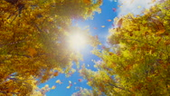 Autumn leaves falling from trees in slow motion Stock Footage