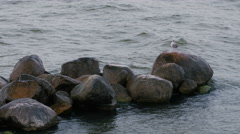 A seagull on a rock Stock Footage
