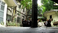 Stray cat Family at playground pavement Stock Footage