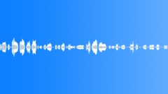 Animals Bears Brown BearSmallWhinesCriesMoanHungry ComplainsSadRaspyMoves Light Sound Effect