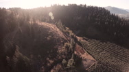 Aerial: Early Morning Light Over Fruit Orchard in Production/Harvest Stock Footage